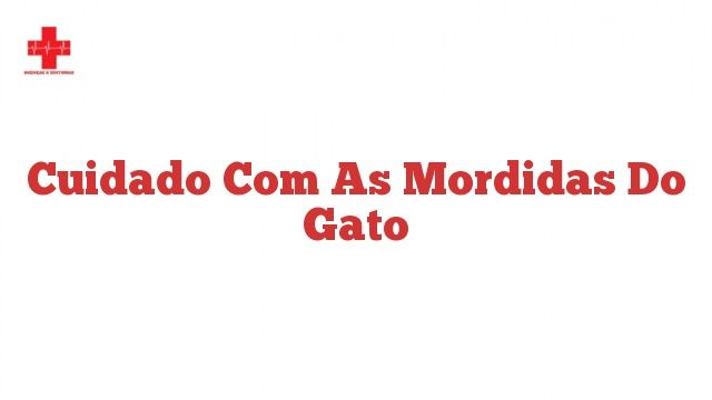 Cuidado com as mordidas do gato